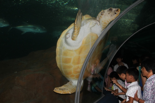 This turtle is huge!