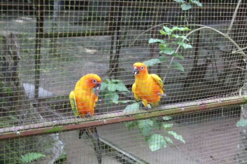 Tropical birds at Deerland
