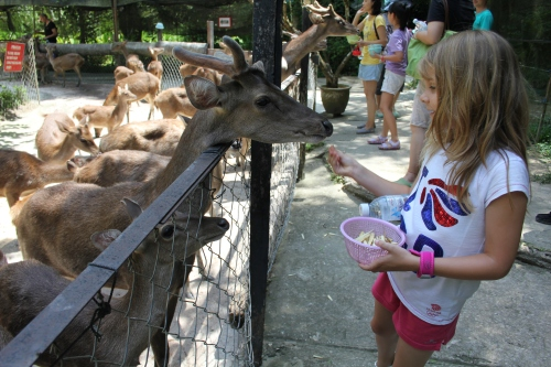 Isabelle making friends with the deer!