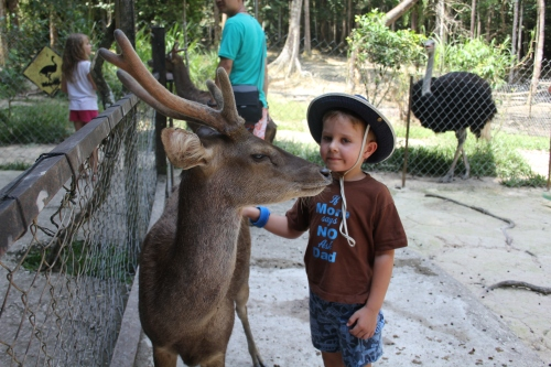 Even the mature deer loved getting petted by Oliver