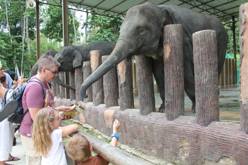 Feeding the elephants with peanuts
