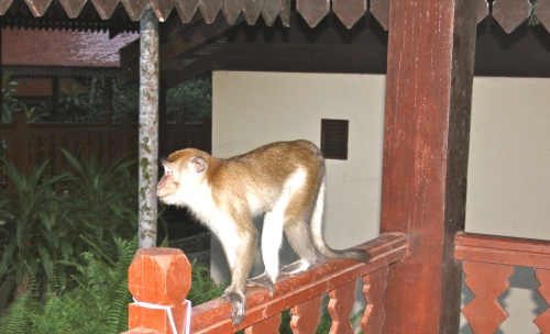 This monkey was waiting right outside our hotel room!!