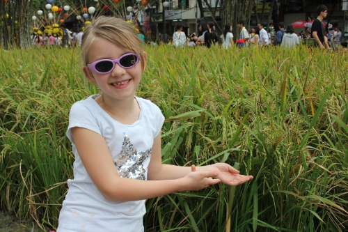 Isabelle pointing to a rice field display.  This is how rice grows!!