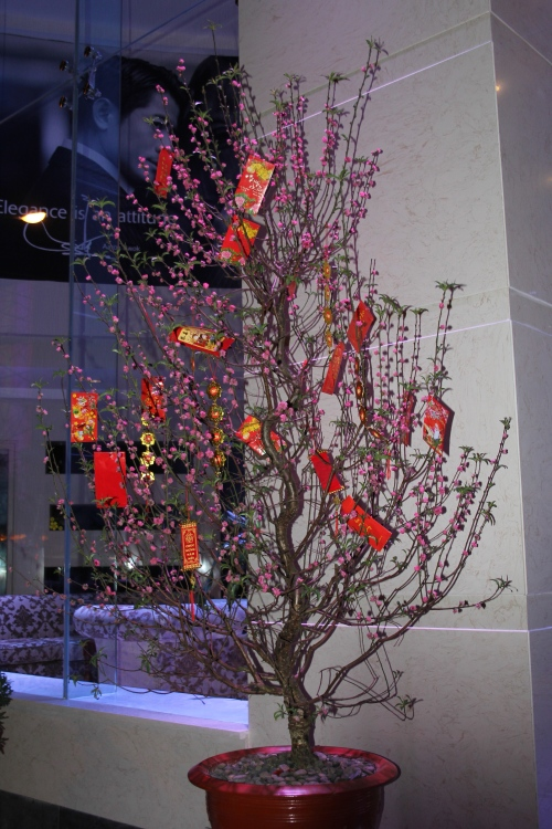 A New Year money tree.  You see these all over China, Hong Kong and Vietnam at the Lunar New Year time.  I am sure that most of Asia  that celebrates this new year does the same thing.
