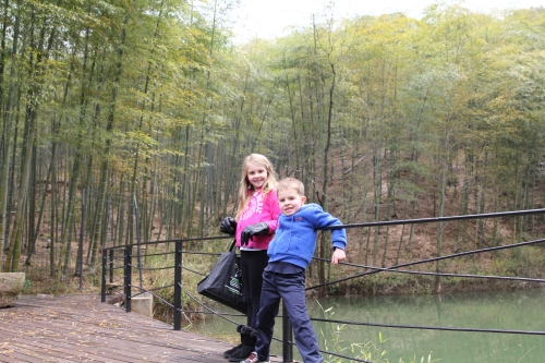 Look at the Bamboo forest behind Isabelle and Oliver.  The whole mountain is covered with bamboo and tea!