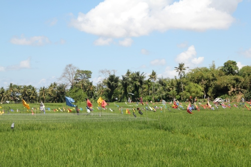 Colourful flags to keep the birds away from the rice fields.