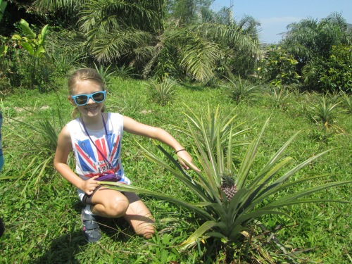 This is how Pineapple's grow!  There was a whole plantation down this particular slope.